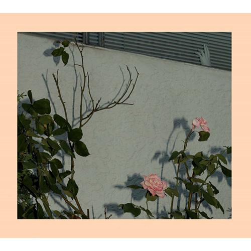 SOFT KILL / ソフト・キル / SAVIOR